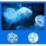 Маска под глаза с экстрактом медузы 60 шт Liftheng